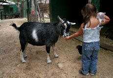 petting звеец Стоковое фото RF