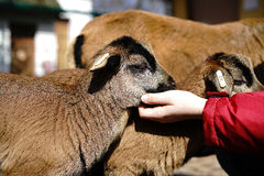 petting звеец Стоковые Фото