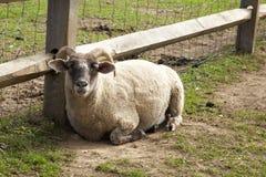 Petting зоопарк Стоковое Изображение RF