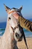 petting лошади Стоковое Изображение RF