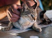Petting a cat Stock Photos