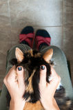 Petting the cat Stock Photos