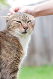 Petting die Katze Lizenzfreies Stockfoto