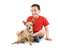 Petting the dog. A young child petting a tiny chihuahua Royalty Free Stock Image