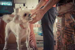 Petting dog chin Royalty Free Stock Images