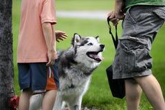 Petting einen Schlittenhund Stockfoto