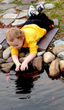 Petting fish. Young boy laying petting fish in backyard pond Stock Images