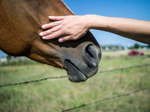 Petting a horse Royalty Free Stock Image