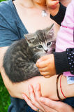 Petting kitten Royalty Free Stock Photos