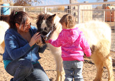 Petting a Miniature Horse Royalty Free Stock Photography