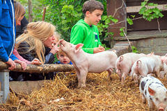 Petting pigs. Young kids are having fun with the piglets in the petting zoo in Zoeterwoude, The Netherlands, on April 30, 2014 Stock Images