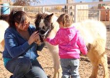 Petting un cavallo miniatura fotografia stock libera da diritti