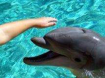 Petting un delfino Immagini Stock