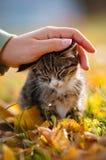 Petting un gattino del tabby fotografia stock