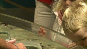 Petting undersea life (16 of 22) stock footage