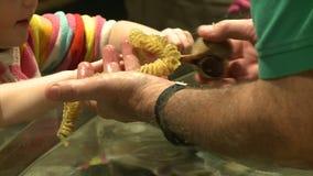 Petting undersea life (18 of 22) stock footage