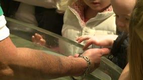 Petting undersea life (15 of 22) stock video