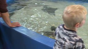 Petting undersea life (3 of 22) stock video footage