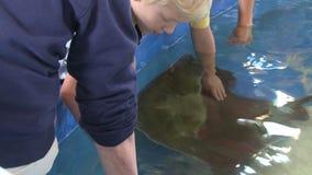 Petting undersea life (10 of 22) stock video