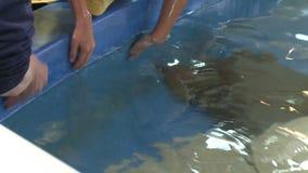 Petting undersea life (9 of 22) stock footage