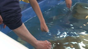 Petting undersea life (8 of 22) stock video footage