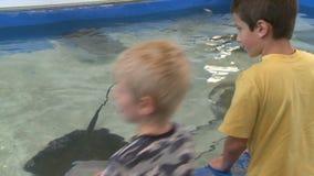 Petting undersea life (6 of 22) stock footage