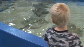 Petting undersea life (4 of 22) stock footage