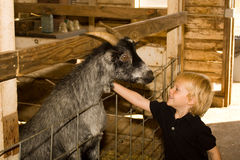 At the petting zoo. Young boy with a goat at a petting zoo Stock Image