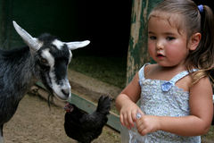 Petting Zoo Conversation Royalty Free Stock Image