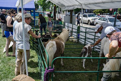 Petting Zoo. Roanoke, VA – May 28th: Families enjoy the petting zoo at the annual Festival in the Park located in Elmwood Park, Roanoke, VA on the 28th of May Royalty Free Stock Photo