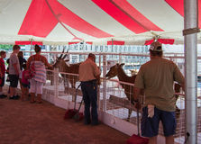 Petting Zoo. Salem, VA – June 29th: Children enjoying the petting zoo at the 16th annual Salem Fair, Salem, VA, USA on the 29th of June, 2016 Royalty Free Stock Photos