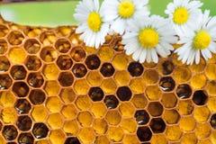 Pettini del miele con le camomille Sfondo naturale immagini stock