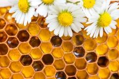 Pettini del miele con le camomille Sfondo naturale fotografie stock