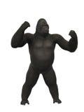 Petto che si batte, scimmia della gorilla su fondo bianco Fotografia Stock Libera da Diritti