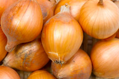 Petty onion Royalty Free Stock Images