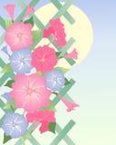 Petunia Illustrazione di Stock