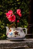 Petunia Axillaris sulla teiera Fotografia Stock Libera da Diritti