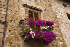 Petunia balcony in Tuscany town Royalty Free Stock Images