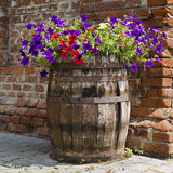 Petunia barrel garden Royalty Free Stock Photo