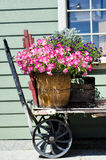 Petunia basket Stock Photo