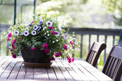 Petunia Basket on Tables Royalty Free Stock Images