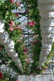 petunia Coloque com as flores da mola e do verão em uns potenciômetros de suspensão em uma estufa Petúnias coloridos em uns poten fotos de stock
