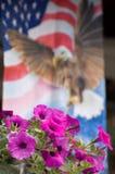 Petunia con la priorità bassa della bandierina Fotografia Stock