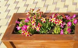 Petunia in de straat Royalty-vrije Stock Afbeeldingen