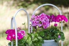 Petunia in de tuin Royalty-vrije Stock Fotografie