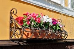 Petunia delle piante della casa e dei vasi da fiori sul davanzale Immagine Stock Libera da Diritti