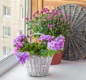 Petunia doble en una cesta Foto de archivo