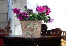 Petunia en una tabla marrón foto de archivo libre de regalías