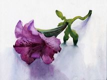 Petunia. Flower background, beautiful, watercolor Stock Photos