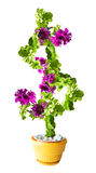 Petunia flower looks like a big dollar sign Royalty Free Stock Photos